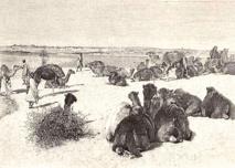 1896 - Tombouctou - Chameaux à l'abreuvoir